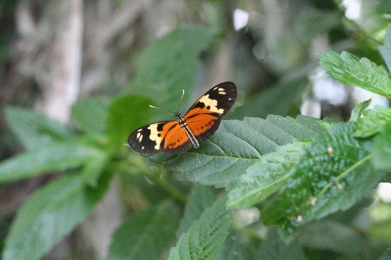 Saiananda: Naturaleza viva