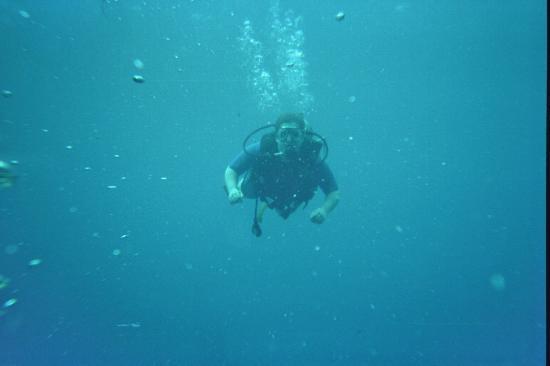 Rangiroa Plongée : plongée ocean
