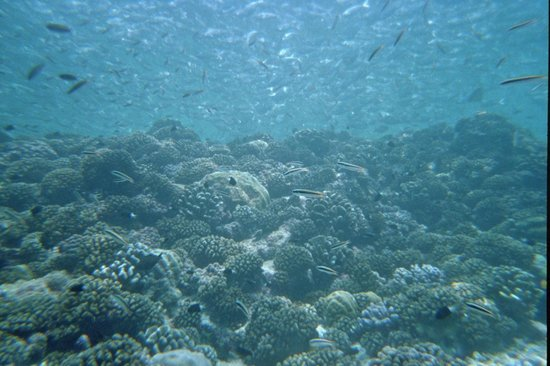 Rangiroa Plongée : ca en fait des poissons