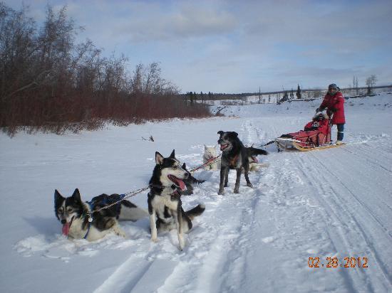 Dog Sledding Day Trip Picture Of Aurora Borealis