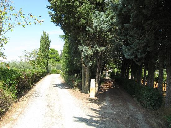 Agriturismo Saletta: Zufahrt zum Hof