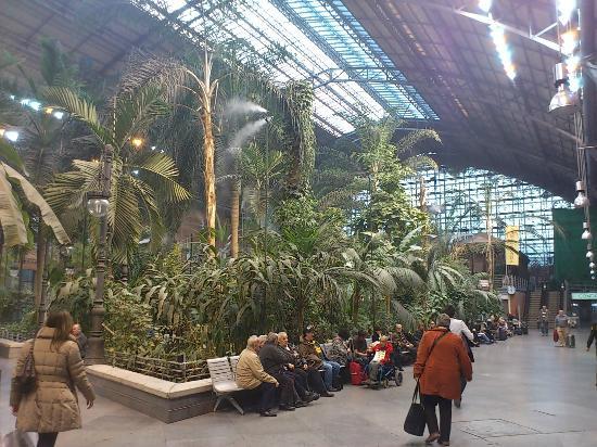 Jardin tropical dentro de la antigua estacion de atocha foto di stazione di atocha madrid - Jardin tropical atocha ...