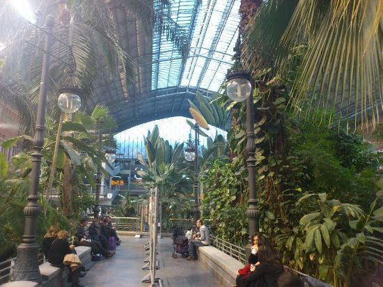 Jardin tropical dentro de la antigua estacion de atocha for Jardines de la puerta de atocha