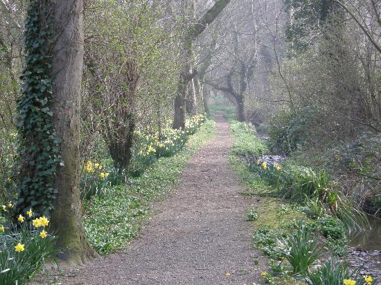 Bishopscourt Glen: Entry path