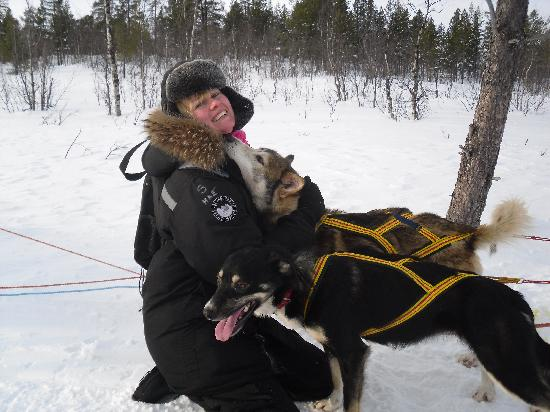 Hotel Arctic Eden: Gorgeous huskys!