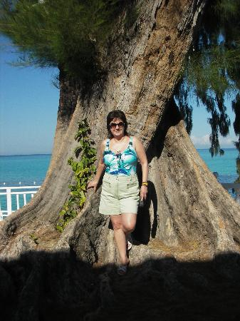 Royal Decameron Montego Beach : Bel arbre majestueux
