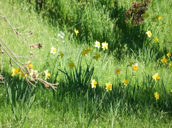 The Raford Inn Bed and Breakfast: Spring flowers in the garden