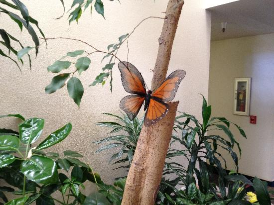 Monarch Resort: Monarch Butterfly in the Lobby Area