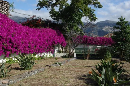 Vilas Oliveira: Garden