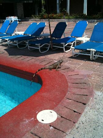 El Cid Granada Country Club: Little friend by the pool
