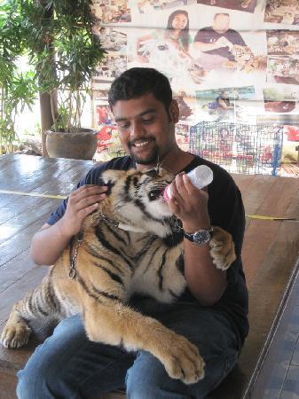 Safari Park Open Zoo: