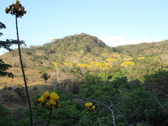 Finca El Mirador: The hills around the Finca