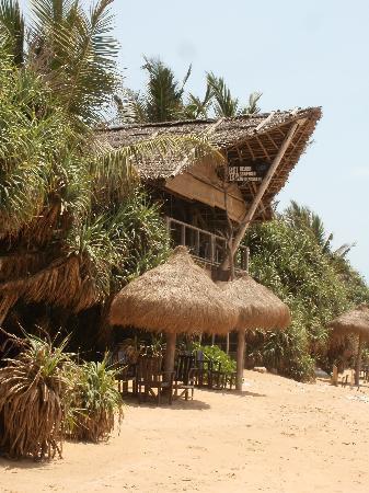 Buba from Mount Lavinia Beach