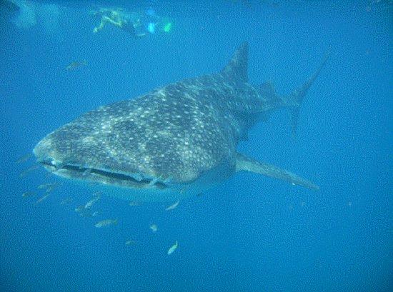 Ningaloo Reef Dreaming