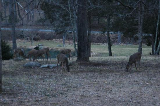 Shadow Mountain Escape : Deer outside the cabin after sunset