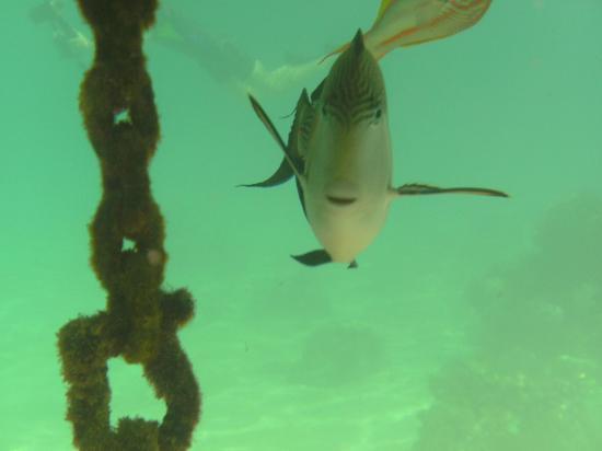 Faraana Reef Resort : Foto (copyright) scattata nei pressi del galleggiante ancorato nei pressi del reef  del resort (