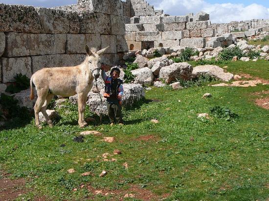 Dead City of Serjilla : Bimbo con mulo