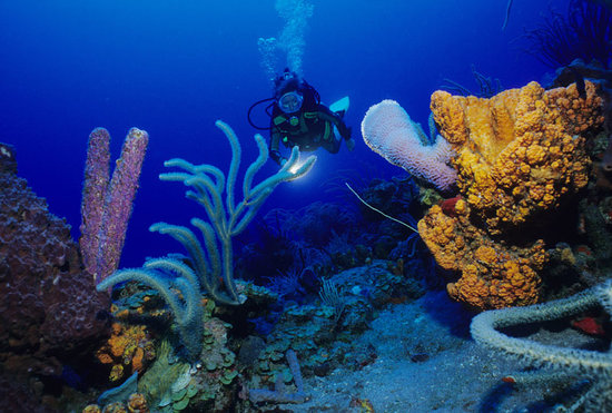 Windwardside, Isla de Saba: colorful corals and sponges...a best kept secret
