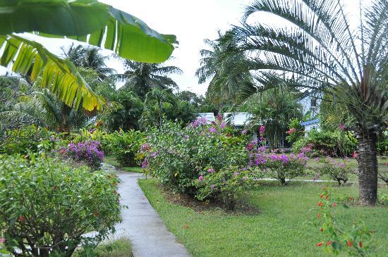 Une vue du jardin picture of fleurs des iles deshaies tripadvisor for Jardin 5 sens guadeloupe
