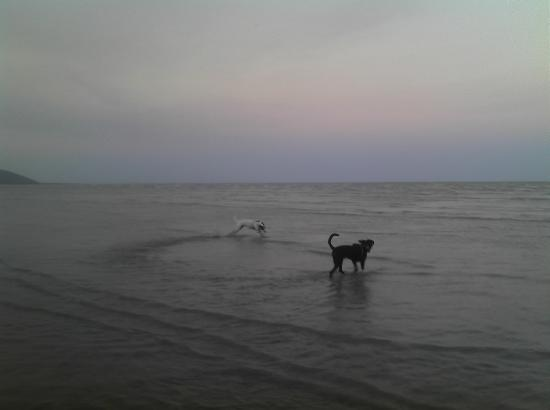 Our dogs enjoying Carmila beach after a day cooped up in the car