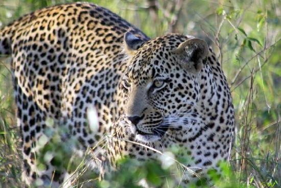 Outlook Lodge: Kruger Park Safari with Outlook