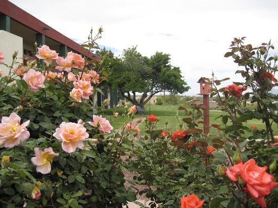 Elephant Butte Inn: Rose Garden
