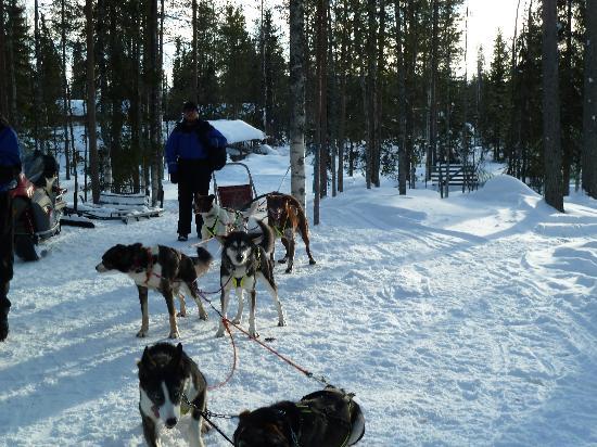 Arctic Husky Farm: our team