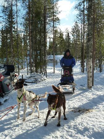 Arctic Husky Farm: Ready for action