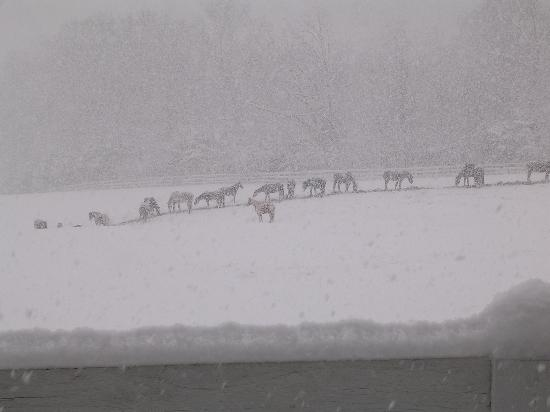 Gordonsville, VA: Horses at Resort - Snowfall