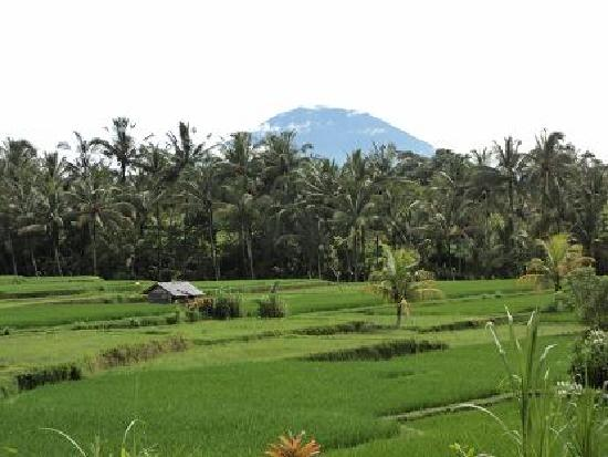 White Lotus Yoga & Meditation Centre: Gunung Agung sacred mountain