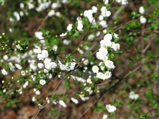 Buffalo National River Park: Wild Flowers