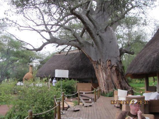 Sanctuary Swala: Another tent