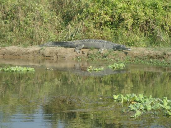 Hotel Silver Home: crocodile in the bank of river while riding Elephant..