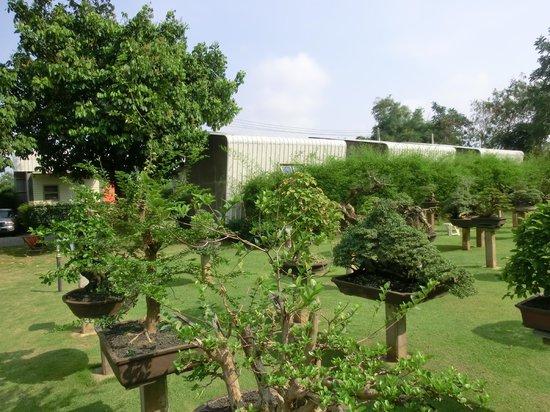 18 Bonsai Garden
