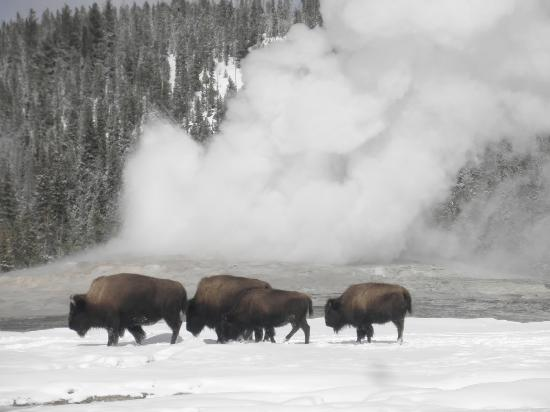 how to get to yellowstone from new york