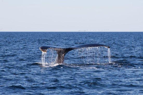 Croisieres aux Baleines Parc de Forillon