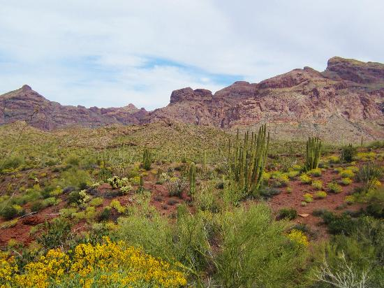 Ajo, AZ: Beautiful Dessert