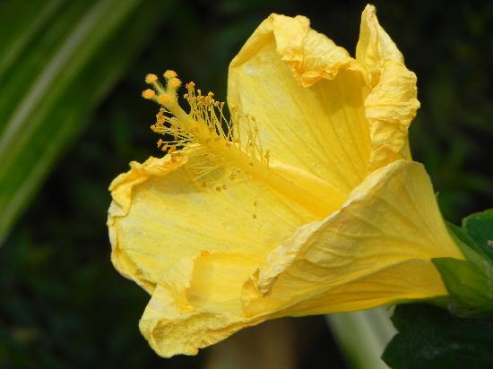 Fleur du jardin botanique de Deshaies - Picture of Jardin Botanique ...