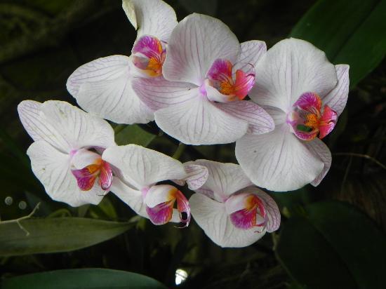 Fleur du jardin botanique de Deshaies - Photo de Jardin Botanique de ...