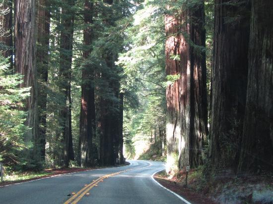 View Crest Lodge: Redwoods Park