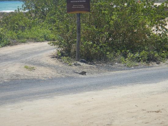 伊瓜納十字精品酒店張圖片