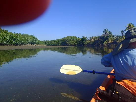 Costa Rica Kayak Fishing - Day Tours: mangroves