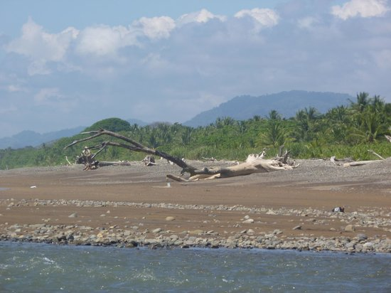 Hotel Domilocos: Large washed up tree