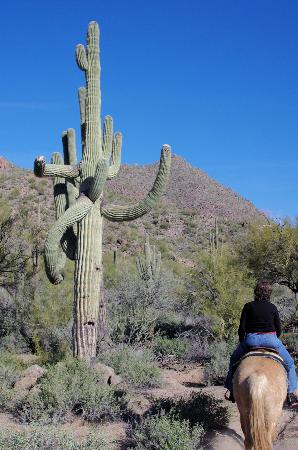 Saguaro Lake Guest Ranch: Horseback riding near an old saguaro.