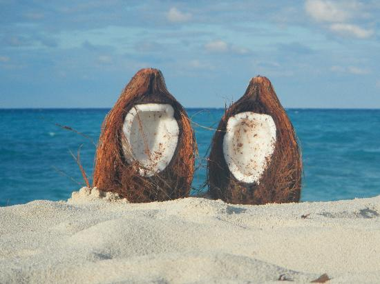 Melia Buenavista: Coconuts on the Main Beach
