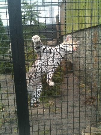 Krakow Zoo (Ogrod Zoologiczny) : I can climb