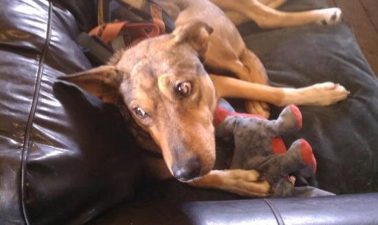 Eden Dogsledding: Resting up for a run!