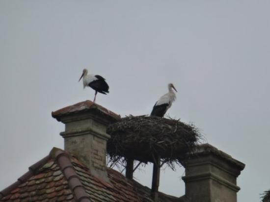 Affenberg Salem: Storks