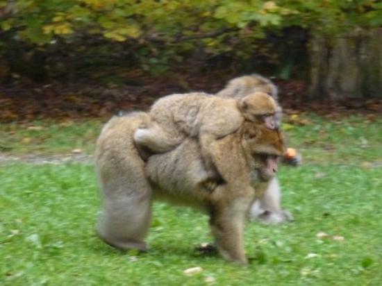 Affenberg Salem: Macaque