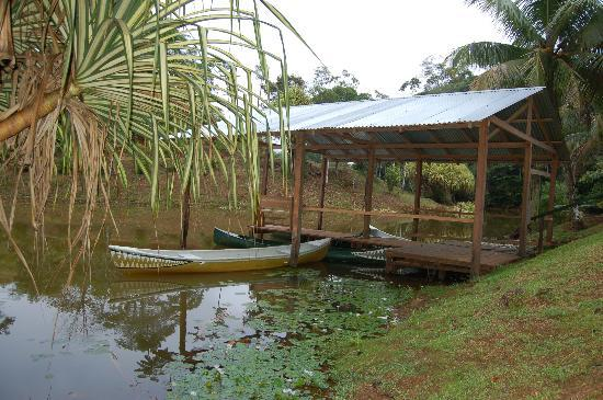 Laguna del Lagarto Lodge: Canoes ready to go
